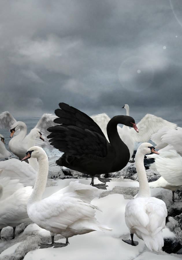 El Cisne Negro Resumen