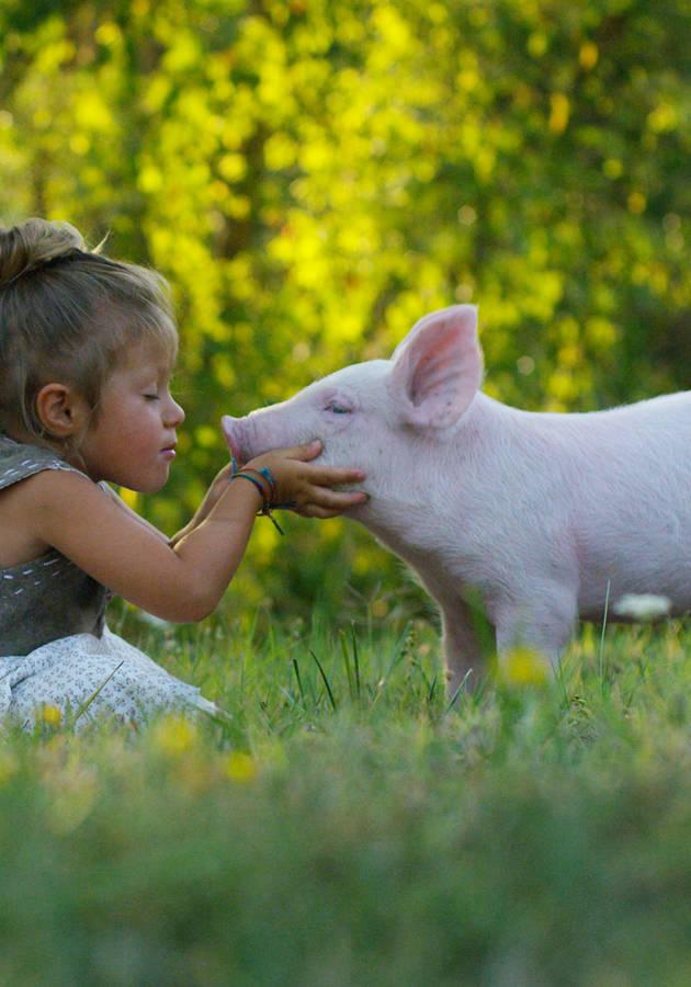 Por Que Amamos Cachorros, Comemos Porcos e Vestimos Vacas Resumo