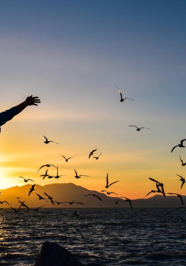 Amar y ser libre Resumen
