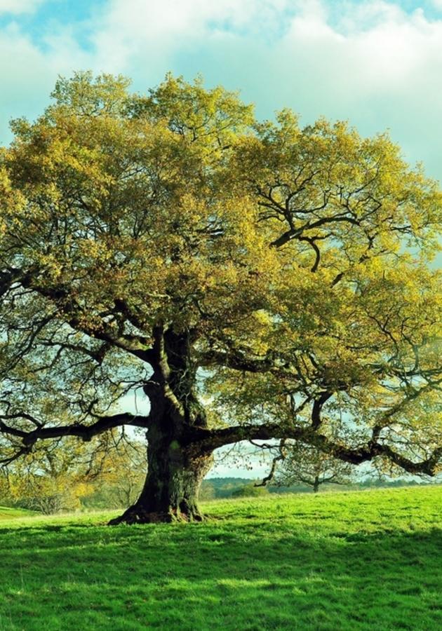 Barking Up the Wrong Tree Summary